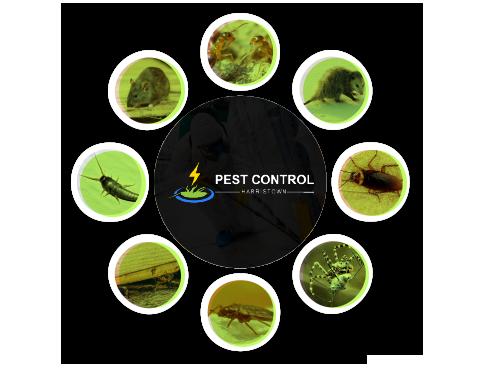 Pest Control Harristown